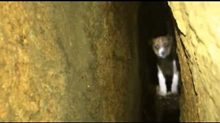 Puppy rescued after a 40-hour rescue