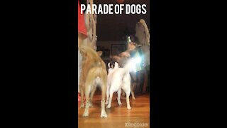 Parade of dogs