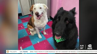 Pet of the week: doggy duo named Lexa & Snoopy