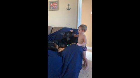 German Shepherd Calmed by best friend.