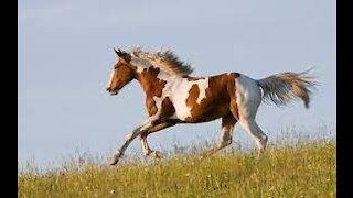 Beautiful horses 2
