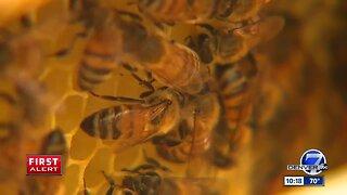Denver beekeeper teaches children at local nonprofit