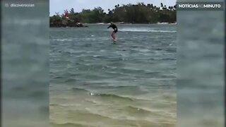 Surfista é surpreendido por raia!