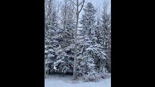 Beautiful Calgary winter wonderland ❄️ ⛄️ .