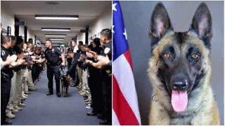 Cão-polícia retirado tem direito a guarda de honra