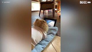 """Cachorro adora assistir o filme """"Pets 2"""""""
