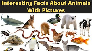 Interesting Facts About Animals With Pictures