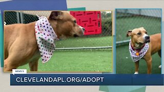 Cleveland APL Pet of the Weekend: 3-year-old pup named Isla