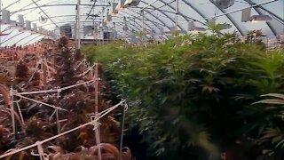 'Cannabis campus,' to begin development in South Buffalo
