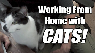 Working from home with cats is no easy task