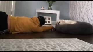 Dog couldn't care less about owner dropping dead