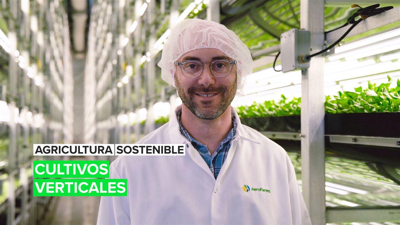 Agricultura sostenible: Cultivos verticales