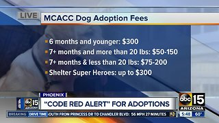 Overcrowded Maricopa County animal shelter issues 'Code Red' alert