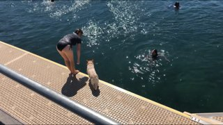 A Dog that loves to dive in, again and again and again