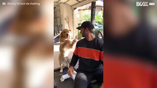 Ce chien est le pire partenaire de gym !