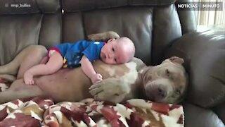 Pitbull e bebê são amigos inseparáveis