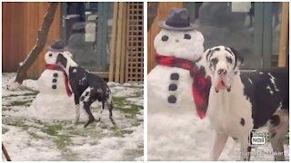 Dog Eats Snowman Nose