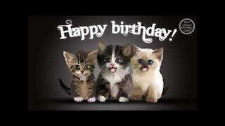 CAT HAPPY BIRTHDAY SONG