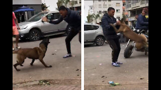 He's fighting with a dog 🐕