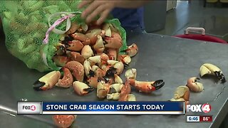 Stone crab harvest season officially opens
