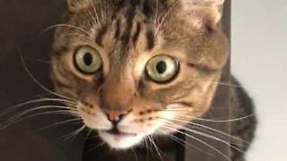 La terreur se lit dans les yeux de ce chat!
