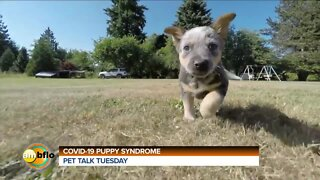 Pet Talk Tuesday - COVID puppy syndrome