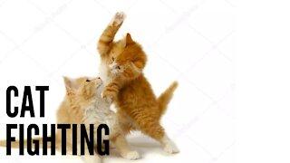 CAT FIGHTING BOXING