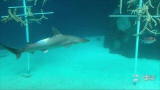 'Shark Guy' gives advice for Shark Week