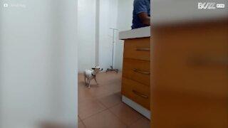 Il cane si preoccupa per il suo amico dal veterinario