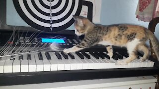 Kitten piano lessons will definitely make you smile