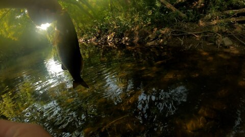 Multi-Species Creek Fishing kind of day