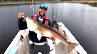 Monster Bull Red Fish Florida Caught Live On Twitch Stream