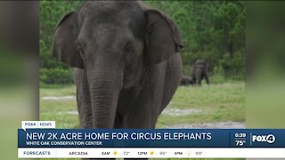 New home for circus elephants in Florida
