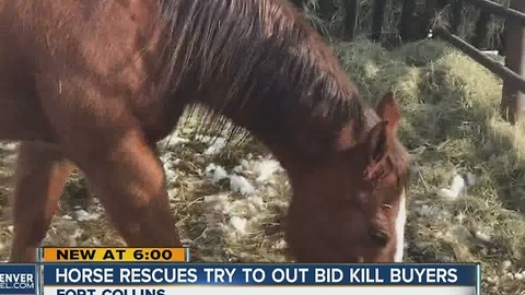 """Rescue groups outbid """"kill buyers"""" at horse auction"""