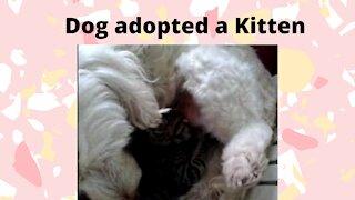 Dog adopted a Kitten