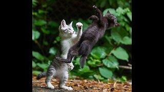 Cat making Weird Noises!