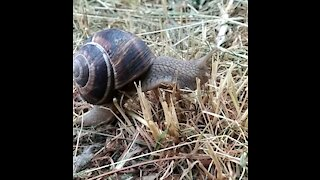 Snail Olympics Hurdles