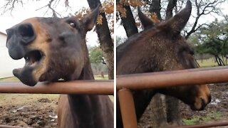 Mule Pulls Off Flawless Dinosaur Impression