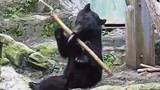 En ekte kung fu-bjørn er funnet i Japan