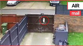 Shocking moment delivery driver hurls ASOS parcel 25ft over a garden fence