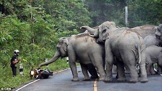 ELEPHANT ATTACK COMPILATION- 2021