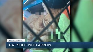 Conneaut police investigating after cat found shot with arrow