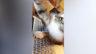 Cats on the Computer