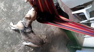 Jealous dog tries to steal puppy's hammock