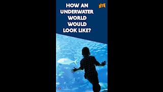 What If We Could Breathe Under Water *
