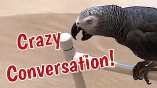 Talking parrot and his owner have a crazy conversation