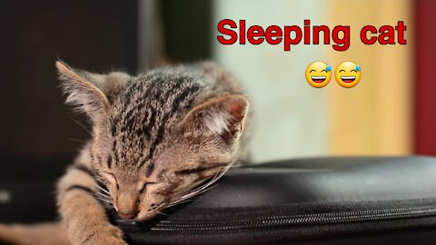 Sleeping cat very funny 😂