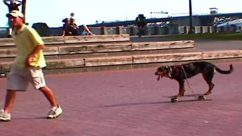 Dog steals skateboard, rides it himself