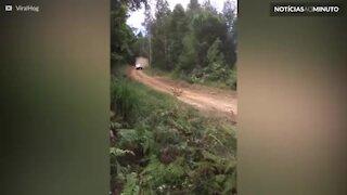 Piloto bate em árvore durante rally na Austrália