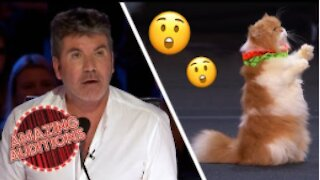 TALENTED Cats On America's Got Talent make you shook